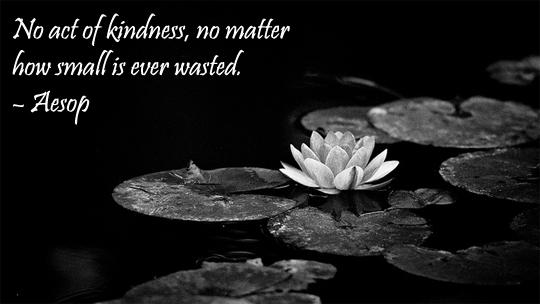 kindness - 5-6-2013