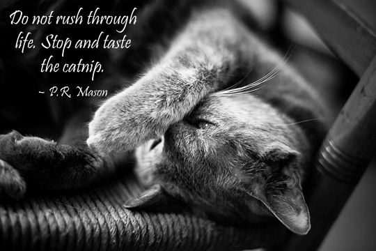 Dont rush through life - 8-18-2013