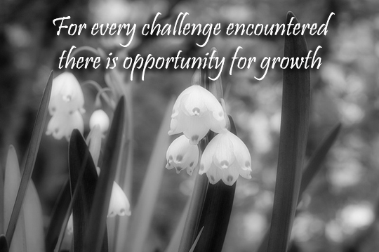 Opportunity for growth - 8-18-2013